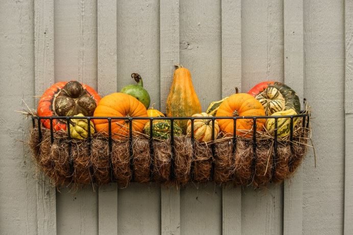 Winter Squash in Wire Wall Basket